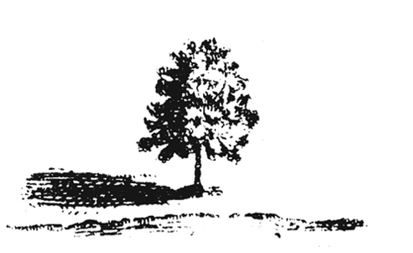 Tree Edition Logo: a lone tree in black and white